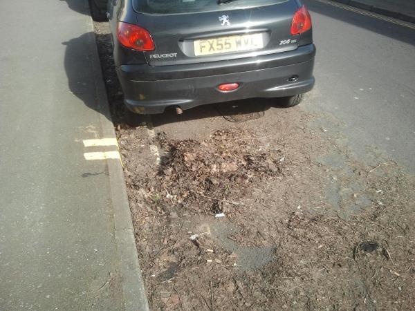Croydon Street leaf litter