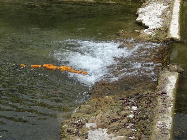 Fish fingers going over a weir